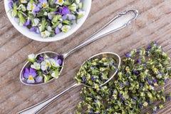 Kleines, violettes heartsease Stockbilder