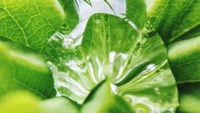 Kleines Wassertröpfchen auf Sommerblatt Stockfotografie