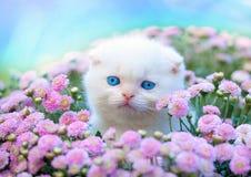 Kleines weißes Kätzchen, das in den Blumen sitzt Stockfotografie