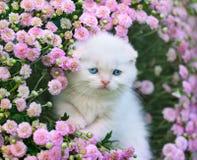 Kleines weißes Kätzchen, das in den Blumen sitzt Stockfotos