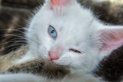 Kleines weißes Kätzchen, das an der Kamera blinzelt Stockfotografie