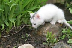Kleines weißes Kätzchen, das herum schaut Stockbilder