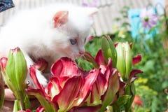 Kleines weißes Kätzchen in den Blumen Stockfotos