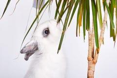 Kleines weißes Kaninchen Stockfoto