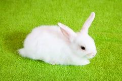 Kleines weißes Kaninchen Lizenzfreie Stockfotos