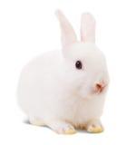 Kleines weißes Kaninchen Stockbild