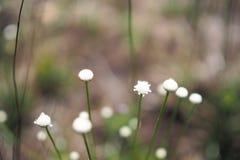 Kleines weißes kehrendes Gras im Yard lizenzfreie stockfotos