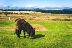 Kleines weiden lassendes Pony Stockbild