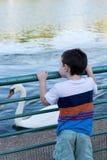 Kleinkind, das einen Höckerschwan betrachtet Lizenzfreies Stockbild