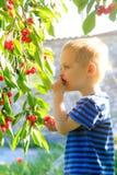 Kleinkind, das Kirschen vom Baum aufhebt Stockfotos