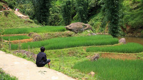 Kleinkind, das nahe terassenförmig angelegtem Reisfeld sitzt Stockbilder