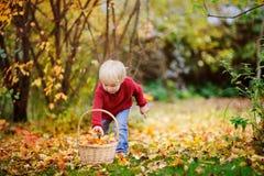 Kleinkind, das Spaß im Herbstpark/-wald hat Stockfotos