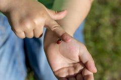 Kleinkind fasziniert durch einen Marienkäfer Stockbild