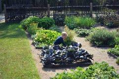 Kleinkind im Gemüsegarten stockfoto