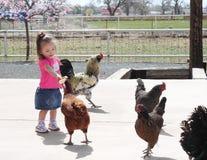 Kleinkind, welches die Hühner speist Stockbild