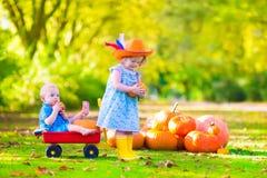 Kleinkinder am Kürbisflecken Stockbilder