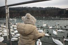 Kleinkindjunge, den See bereitstehend, große Gruppe Schwäne schauend Lizenzfreies Stockfoto