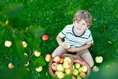 Kleinkindjunge, der rote Äpfel auf Bauernhofherbst auswählt Lizenzfreie Stockfotos