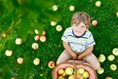 Kleinkindjunge, der rote Äpfel auf Bauernhofherbst auswählt Lizenzfreies Stockfoto