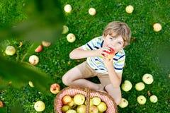 Kleinkindjunge, der rote Äpfel auf Bauernhofherbst auswählt Stockbild