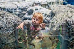 Kleinkindjunge passt Fische im Aquarium auf Stockfoto