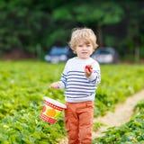 Kleinkindjungen-Sammelnerdbeeren auf Bauernhof, draußen stockbild