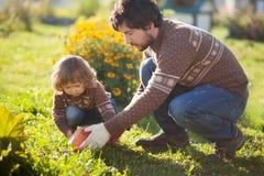 Kleinkindmädchen und ihr Vater, die orange Kürbis ernten Lizenzfreie Stockfotografie