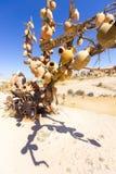 Kleipotten op de boom Rotskerken en duifzolders Zwaardvallei, Goreme, Cappadocia, Anatolië, Turkije populair stock foto's