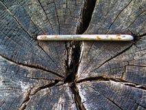 Klem in het hout stock afbeeldingen