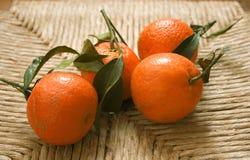 Klementinen mit Blättern stockbilder