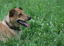 Klemmen Sie Hundekopf Lizenzfreie Stockfotografie