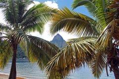 Kletterhaken St Lucia zwischen zwei Palmen Stockfoto