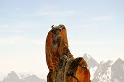 Klettern in Mont Blanc Lizenzfreie Stockfotografie