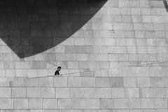 Kletternde Treppe des Mannes an Guggenheim-Museum stockbild