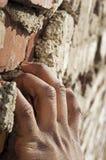 Kletternder Ziegelstein Lizenzfreies Stockfoto