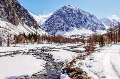 Kletterndes Lager Aktru, das Spitzen-KarataÅŸ, Altai Fluss Aktru Stockfotos