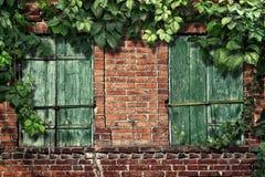 Kletterpflanze auf der alten Backsteinmauer mit Fenstern Lizenzfreie Stockfotos