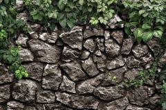 Kletterpflanze auf der alten Steinwand Lizenzfreie Stockfotos