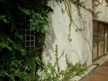 Kletterpflanze und Busch, die auf Wand des Gebäudes wachsen lizenzfreie stockfotografie