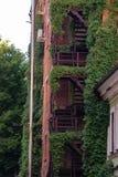 Kletterpflanzen auf der Feuermetalltreppe eines Backsteinbaus stockfotos