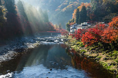 Kleur Autumn Leaf stock afbeelding