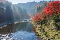 Kleur Autumn Leaf royalty-vrije stock foto's