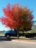 Kleur me dalingsbomen stock foto