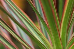 Kleur van bladeren Royalty-vrije Stock Foto