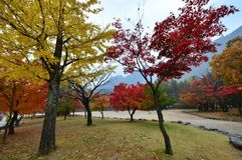 Kleur van bomen Stock Foto