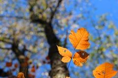 Kleur van daling Stock Foto