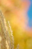 Kleur van Daling royalty-vrije stock fotografie