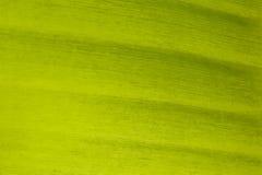 Kleur van de achtergrond van het banaanblad Stock Foto's
