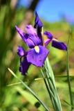Kleur van de dag Royalty-vrije Stock Foto's