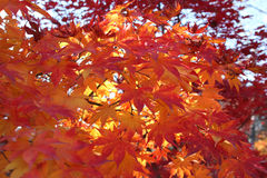 Kleur van de herfst Stock Foto's